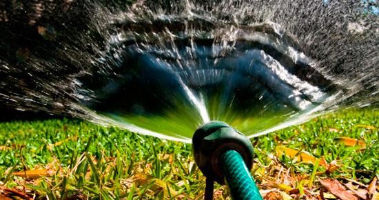 как поливать растения правильно