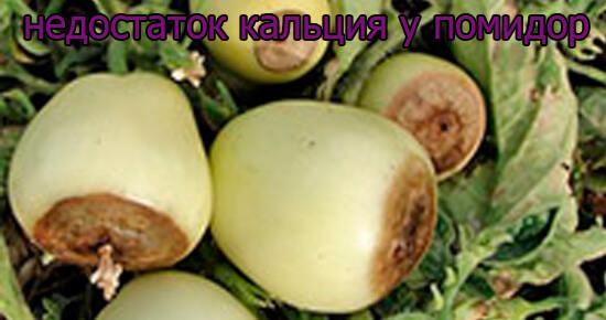 priznaki-nedostatok-kalcija-u-pomidor