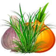 пряные растения