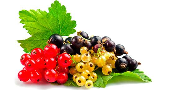 вредители и болезни черной смородины