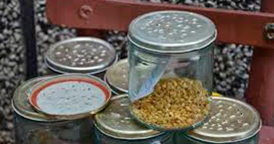 kak-pravilno-hranit-semena-doma
