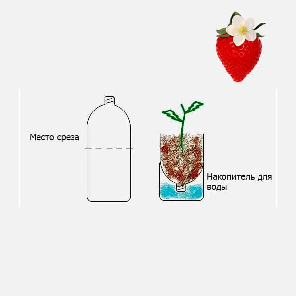 выращивание клубники в пластиковой бутылке с поддоном
