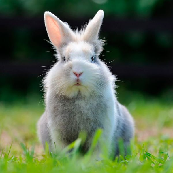 можно ли использовать кроличий навоз как удобрение
