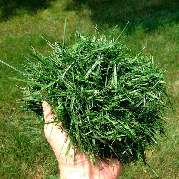 органические удобрения из травы