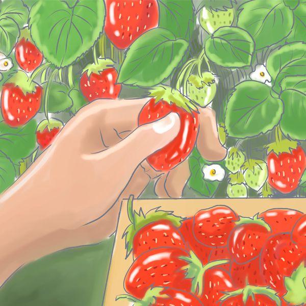 органические удобрения для клубники