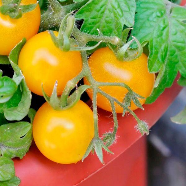 органические удобрения для томатов