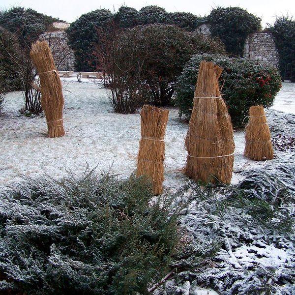 спасаем растения от мороза