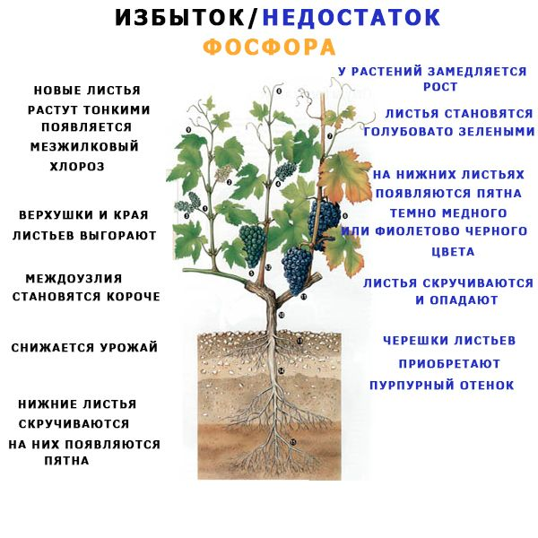 недостаток и избыток фосфора у растений