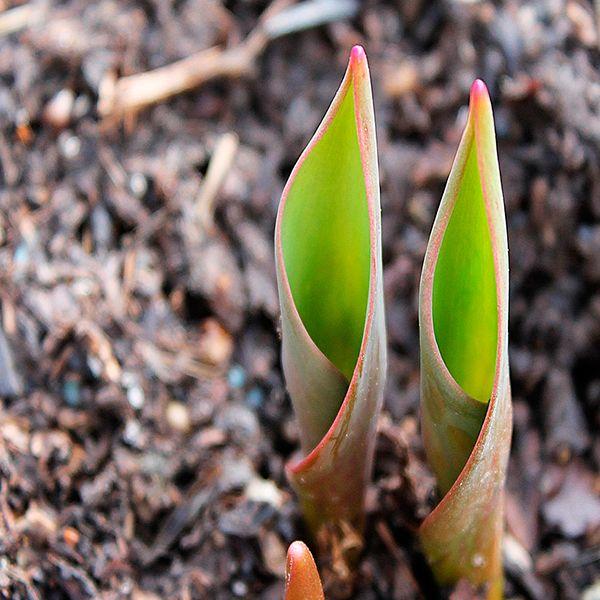 мыльчирование почвы травой и соломой