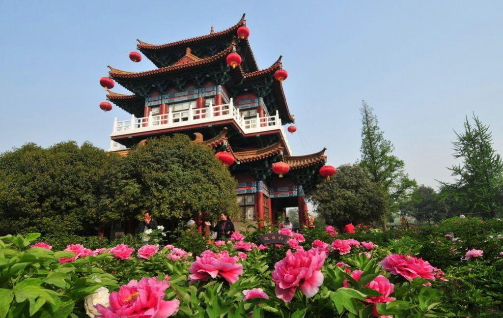 пионы в китайском монастыре