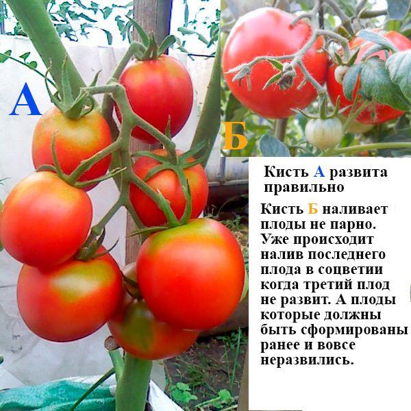 подкормка томатов во время цветения