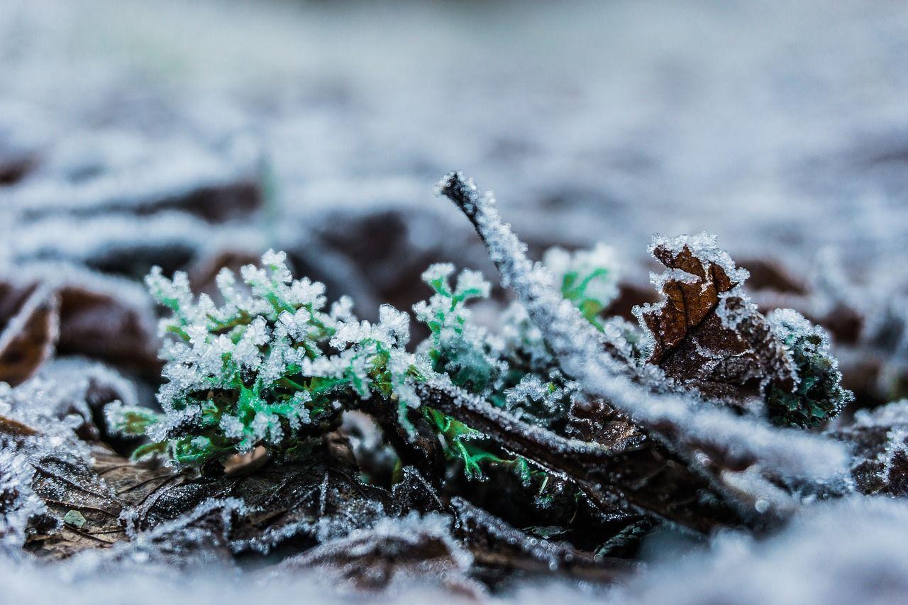 спасти растения в аномально теплую осень